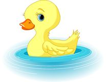 Swimming Duckling Stock Photos