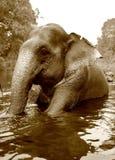 Swimming elephant Stock Photos