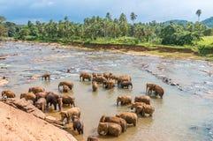 Swimming elephants Stock Images