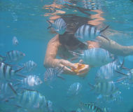 Swimming with fish in the ocean. Woman swimming with fish in the ocean and feeding them Royalty Free Stock Photography
