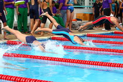 Swimming Freestyle Jersey. The swimming competition Stock Photos