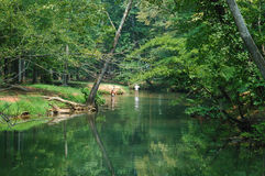 Swimming hole. In Alabama stock photo