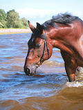 Swimming horse in gulf Royalty Free Stock Photo