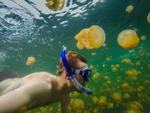 Swimming in Jelly Fish Lake. Migrating through Jellyfish Lake with Golden Jellyfish in Palau Stock Image