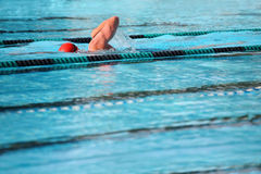 Swimming laps Stock Photos