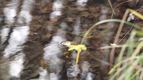 Swimming Leaf in a Creek stock footage