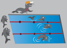 Swimming lessons 1. Dolphins swimming in a competition Royalty Free Stock Photo