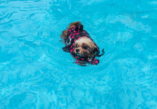 Swimming Mixed Breed Dog Stock Images