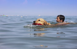 Boy and dog swimming Royalty Free Stock Image
