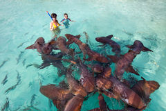 Swimming with nurse sharks Royalty Free Stock Photos
