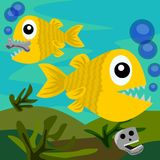 Swimming piranhas Stock Images