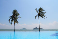 Swimming pool. In a tropical hotel , with coconut, Thailand Stock Photos