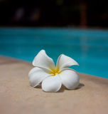 Swimming pool. Rest in a clean warm pool Royalty Free Stock Photos