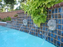 Swimming pool. Lion head fountains around the side of a swimming pool topped with ivy Stock Photos