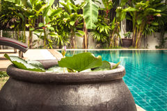Swimming pool area with decoration bowl with water lily at private villa backyard Stock Images