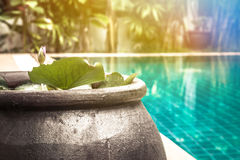 Swimming pool area with decorative asian style bowl with water lily among lush tropical garden with sunlight and copy space at pri Royalty Free Stock Photo