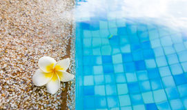 Swimming pool in clubhouse with flower. Edge of swimming pool in clubhouse with flower Stock Image