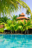 Swimming pool with coconut palm trees, vertical. Cristal clear swimming pool surrounded by coconut palm trees, vertical view Royalty Free Stock Photos