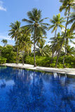 The swimming pool and coconut trees Stock Photo