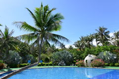 Swimming pool with coconut trees Royalty Free Stock Images