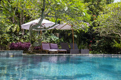 Swimming pool and deck chairs in tropical garden. Island Bali, Ubud, Indonesia Royalty Free Stock Photo