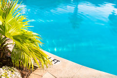 Swimming Pool. Detail of swimming pool and deck with palm tree landscaping Stock Photos