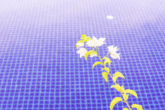 Swimming pool with flower. Can be used as background Royalty Free Stock Images