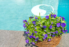 Swimming pool and flower Stock Photo