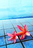 Swimming pool and flowers, tropical resorts hotel. Still life mood image of two bright red pink tropical flowers on the side of a blue swimming pool of a resort
