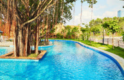 Resort swimming pool. Blue outdoor swimming pool under old big tree in resort garden Royalty Free Stock Photography