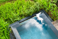 Swimming pool in the garden. Stock Photography