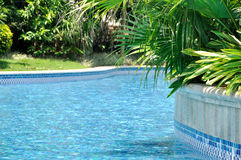 Swimming pool and green plant arround Stock Image