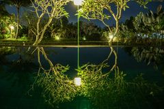 Swimming pool in the jungle. Bali Indonesia Reflection of trees on infinity pool stock images