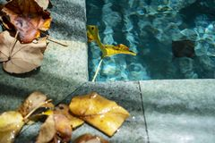 Swimming pool ledge. A swimming pool ledge covered with dry fallen leaves royalty free stock images