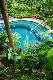 Swimming pool, natural plant screen landscaping stock images