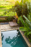 Swimming pool near the tropical Villa. Nature. Royalty Free Stock Photography