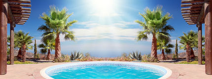 Swimming Pool and nice Palm Royalty Free Stock Photography