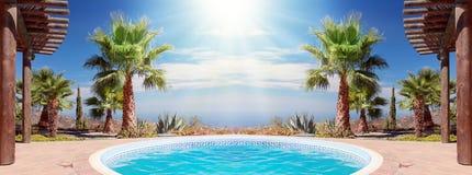Swimming Pool and nice Palm. Tropical Scene with swimming pool and nice palm Royalty Free Stock Photography