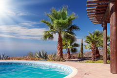Swimming Pool and nice Palm. Tropical Scene with swimming pool and nice palm Royalty Free Stock Photos
