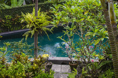 Swimming pool and palm tree in tropical garden.  Bali, Ubud, Indonesia Royalty Free Stock Images