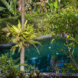 Swimming pool and palm tree in tropical garden. Bali, Ubud, Indonesia Stock Photography