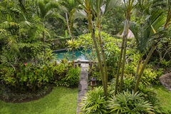 Swimming pool and palm tree in tropical garden. Bali, Ubud, Indonesia Stock Image