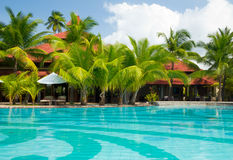 Swimming pool with palm trees. Cristal clear swimming pool  with  coconut palm trees Royalty Free Stock Photography
