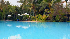 Swimming Pool With Palm Trees stock video footage