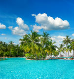 Swimming pool with palm trees and blue sky. Swimming pool surrounded by lush tropical plants and palm trees over blue cloudy sky Royalty Free Stock Images