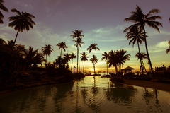 Swimming pool with palm trees at twilight. Nature. Royalty Free Stock Photography