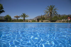 Swimming pool with palms Royalty Free Stock Images