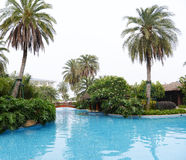 swimming pool with palms Royalty Free Stock Image