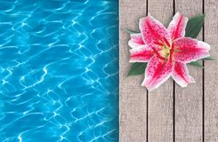 Swimming pool and pink lily on wooden deck ideal Royalty Free Stock Image