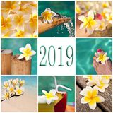 2019 swimming pool and plumeria collage. 2019, swimming pool and plumeria collage stock images